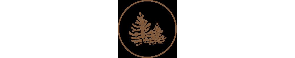 Au bois enchanté - Boomerang - Accueil -  Boomerang Warukay